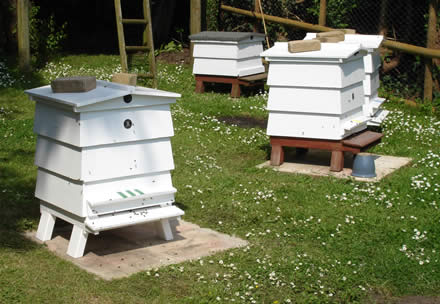 Now we have an apiary