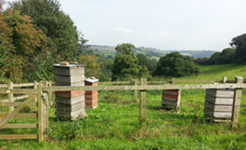 Green Lane Apiary