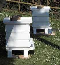Bait hive set up in the apiary