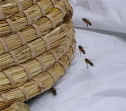 Bees around skep