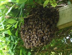 A typical small swarm
