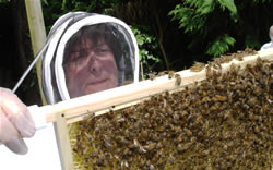 The apiary lady